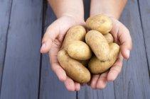 Nahaufnahme der menschlichen Hände halten frische Kartoffeln — Stockfoto