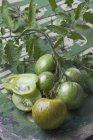 Нарізаний і абсолютно зелений Зебра помідори на пошарпаний деревини з листям — стокове фото