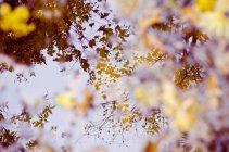 Німеччина, Гейдельберг, відображення дерев і листя в калюжу — стокове фото