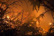 Germany, Forest fire in Heilbad Heiligenstadt — стокове фото
