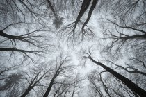 Low angle view of beech forest in fog — Stock Photo