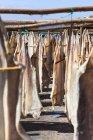 Португалія, в'яленої для сушіння в Камара-де-Лобос поблизу міста Фуншал — стокове фото