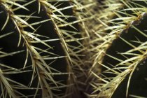 Germany, Munich, Botanical garden, Echinocactus grusonii, close up — Stock Photo