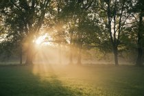 Germany, Bavaria, Landshut, trees and morning mist — Stock Photo