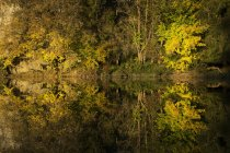 Water reflection of autumnal forest of Danube Nature Park, Germany — Stock Photo