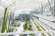 Interior of modern greenhouse with different plants — Stock Photo