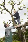 SFather helping son to climb tree, smiling — Stock Photo