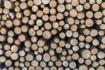 Registros de pilha de madeira ao ar livre — Fotografia de Stock