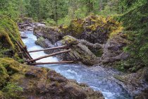 Canadá, Columbia Británica, Vancouver Island, Little Qualicum Falls Provincial Park - foto de stock