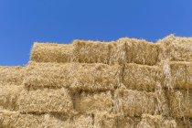 Соломенные кипы после сбора урожая против голубого неба — стоковое фото