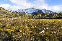 Vista de plantas verdes em highland vulcânica, Landmannalauger, Sudurland, Islândia — Fotografia de Stock