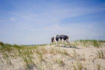 Pé de cão Dinamarca, Romo, no mar do Norte — Fotografia de Stock