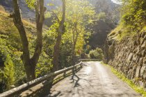 Spain, Asturia, Picos de Europa National Park, Ruta del Cares, Winding road  surrounded by trees during daytime — Stock Photo