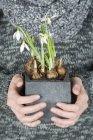 Donna che tiene pianta Bucaneve — Foto stock