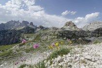 Italy, Dolomites, Tre Cime di Lavaredo mountains and wildflowers — Stock Photo