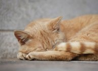 Крупным планом Рыжая кошка спать на земле — стоковое фото