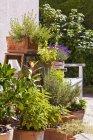Alemania, Stuttgart, Potted hierbas en el jardín - foto de stock