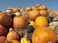 Germany, Variety of pumpkins during daytime — Stock Photo