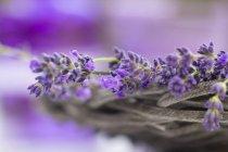 Cesta de flores de lavanda, vista de cerca, enfoque selectivo - foto de stock