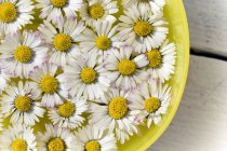 Цветы ромашки в ванне, закрыть — стоковое фото