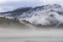 Canadá, Columbia Británica, Valle Khutzeymateen, Parque Provincial Khutzeymateen, fiordo con niebla - foto de stock