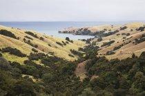 Nuova Zelanda, Coromandel Peninsula, Golfo di Hauraki, sud dell'oceano Pacifico — Foto stock