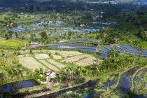 Indonesia, View of rice fields at mount Abang  during daytime — Stock Photo