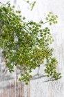 Цвести веточки петрушки на поверхности древесины — стоковое фото