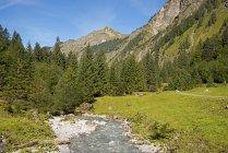 Alemanha, Bavaria, vale Oy, Oybach, árvores ao longo do fluxo do rio e colina em plano de fundo — Fotografia de Stock