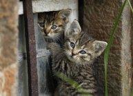 Kittens playing in broken window outdoors — Stock Photo