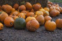 Fresh picked autumn pumpkins on ground — Stock Photo