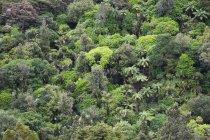 Neuseeland, Coromandel Halbinsel Teil des Regenwaldes tagsüber — Stockfoto