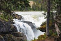 Канада, Альберта, яшми національного парку, Атабаска річки, Атабаска водоспад — стокове фото