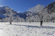 Autriche, Tyrol, Eng, Grosser Ahornboden, paysage avec les érables recouverte de neige — Photo de stock