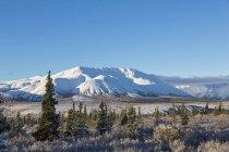 Denali National Park with mountain range on background, Alaska, USA — Stock Photo