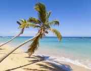 View of tropical beach with palm trees at daylight, Dominican Republic — Stock Photo