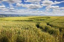 Paysage de domaine de l'agriculture du Land de Rhénanie-Palatinat, Allemagne — Photo de stock