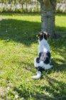 Jack Russel Terrier cachorro sentado ao lado da árvore no jardim — Fotografia de Stock