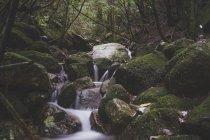 Япония, Якусима, Водопад в джунглях — стоковое фото