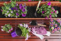 Gardening, different spring and summer flowers, flower box and gardening tools on garden table — Stock Photo
