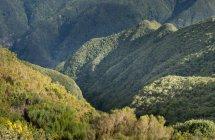 Portugal, Madère, Plateau Paul da Serra, vue sur la vallée — Photo de stock