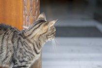 Turchia, Istanbul, Cat che guarda attraverso l'ingresso della porta — Foto stock