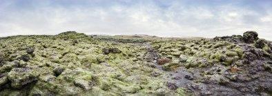 Ісландія, моховий лавових полів в денний час — стокове фото