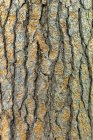View of Tree bark, close up — Stock Photo