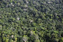Vista aerea di Amazon rain forest, Brasile, Para — Foto stock
