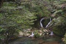 Япония, Водопад в тропических лесах острова Якусима — стоковое фото