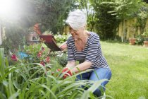 Smiling Woman gardening plants  outdoors — Stock Photo