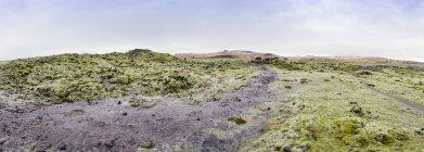 Перегляд моховий лавових полів в денний час, Ісландія — стокове фото