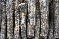 Gros plan de racines de raifort mûrs empilées — Photo de stock