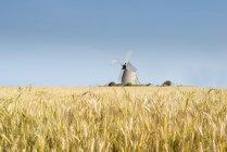 França, Normandia, Moinho de vento no campo de trigo, Triticum — Fotografia de Stock